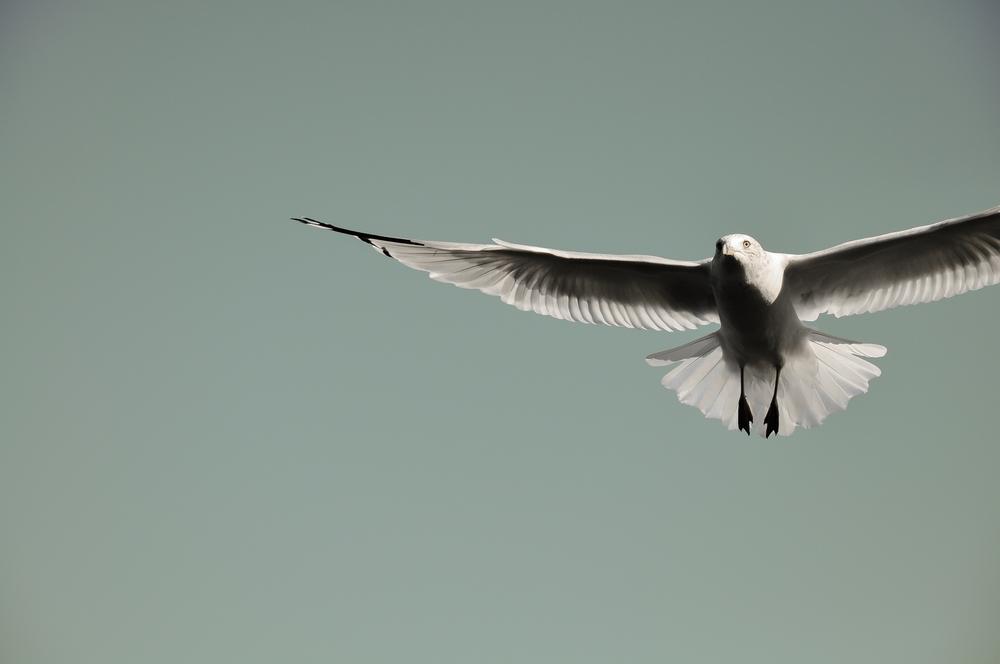 Seagull_12.jpg