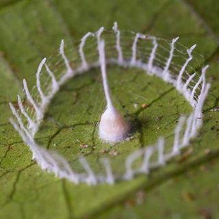 Silkhenge Spider structure
