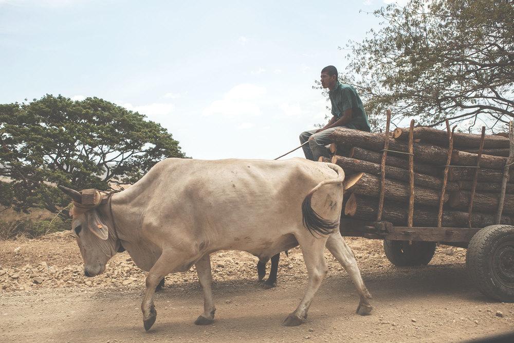 cattlecart_web.jpg