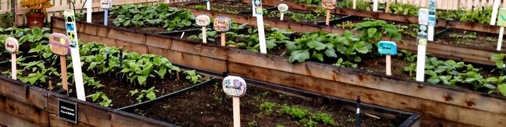 learning garden