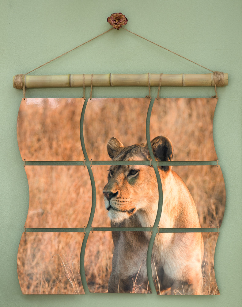 African Lioness mural