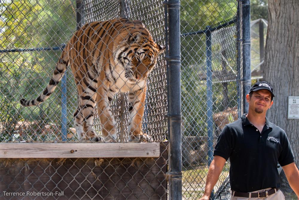 Natasha tiger and Adam, Shambala Preserve, by Terrence Robertson-Fall