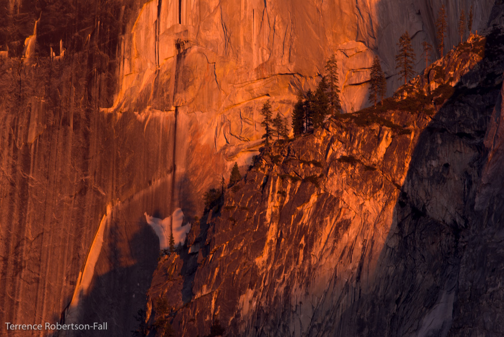 Pine trees on Half Dome, Yosemite National Park by Terrence Robertson-Fall