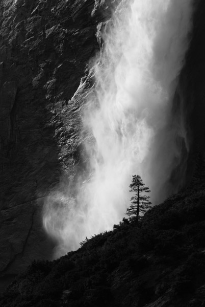 Standing Tall.  Photograph by Terrence Robertson-Fall.   A lone pine tree stands tall and strong, silhouetted against the towering, pounding force of Yosemite Falls in Yosemite National Park.  Despite the raw power of the water, the sunlight reveals subtle layers in the water as it spins and twists in the air.  This was taken in May, when the water runs the strongest.