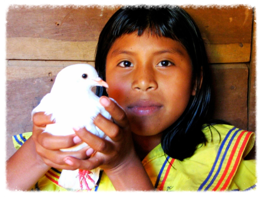 Photo credit: ©amygigialexander 2014/ Ngabe girl with dove, Comarca Bugle, Panama
