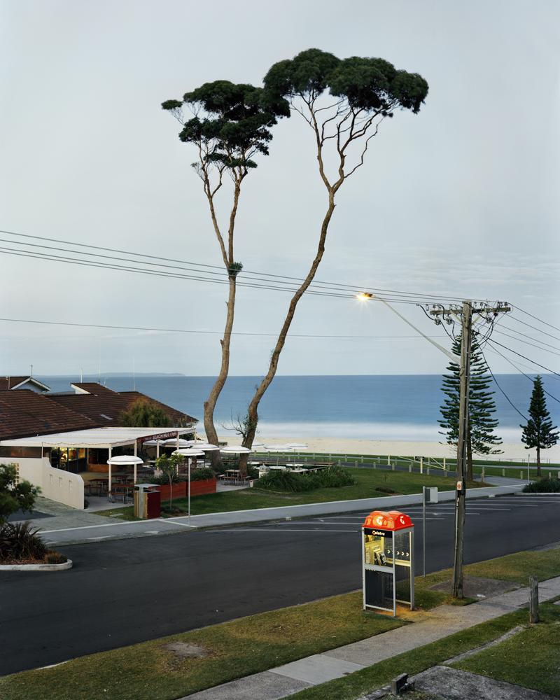 trees2 002