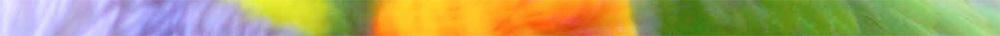 Colour-Banner.jpg