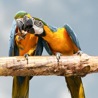 BirdBrain-31650340.jpg