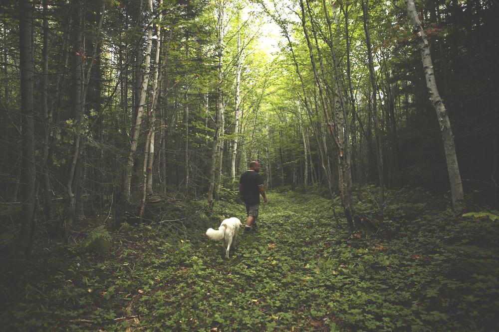 Gérard_forest.jpg