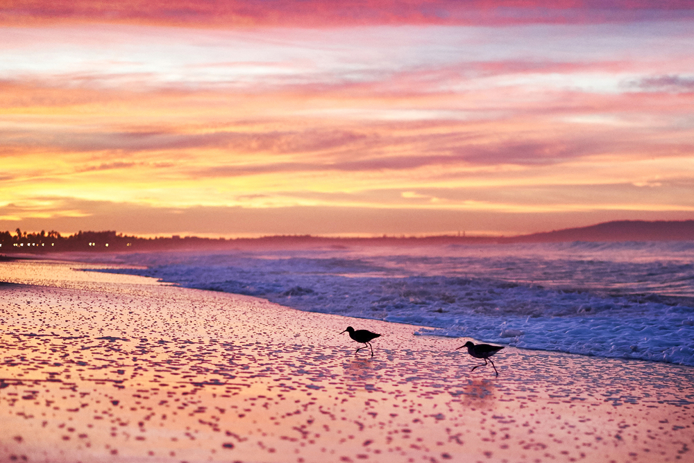 sunrise-santa-monica-beach-street-photographer.jpg