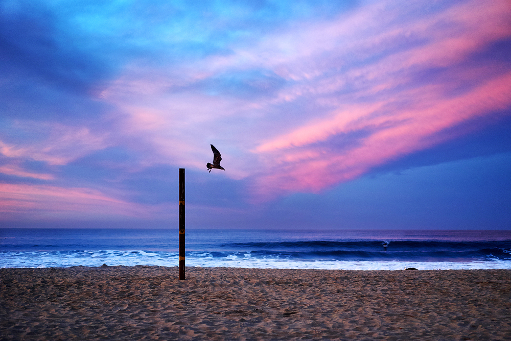 bird-in-flight-santa-monica-beach-pier.jpg