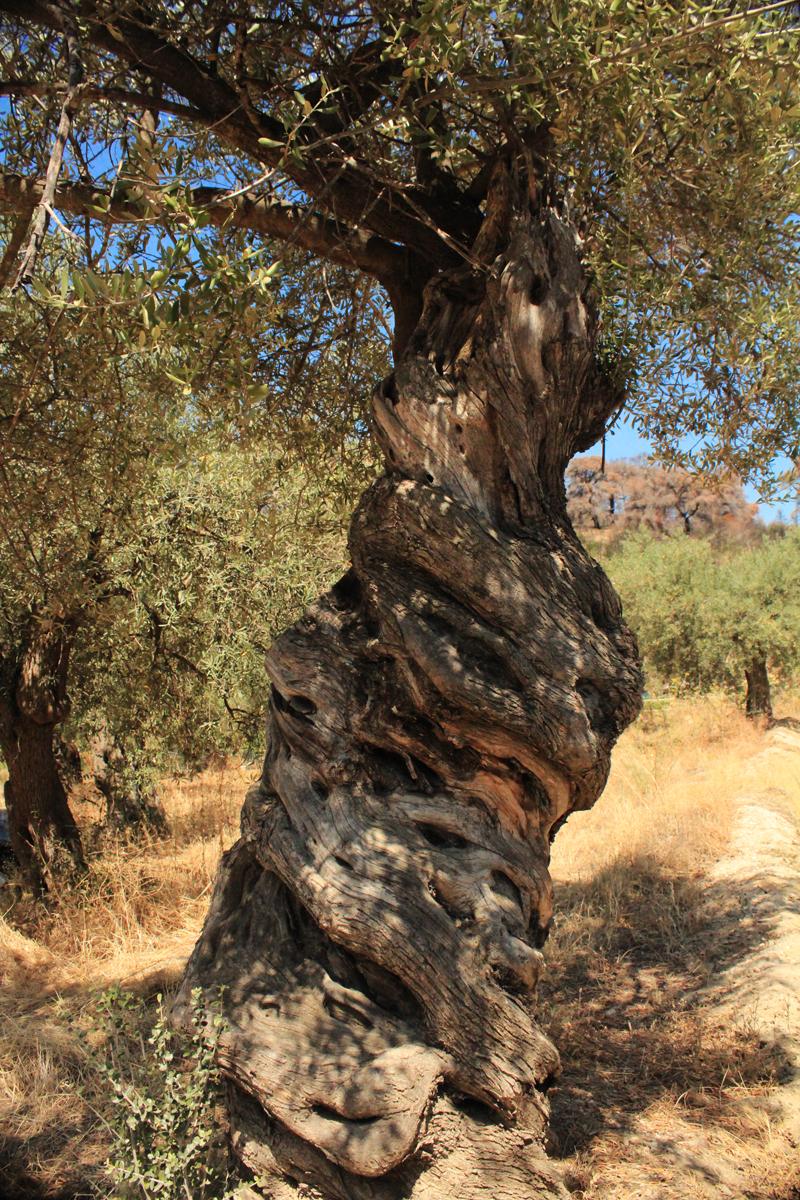 Σκήτες, Ουρανούπολη, Χαλκιδική - Skites, Ouranoupoli, Halkidiki  (24).jpg