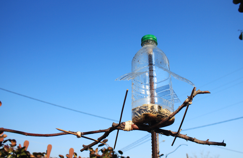 how to make bird feeders (3).jpg