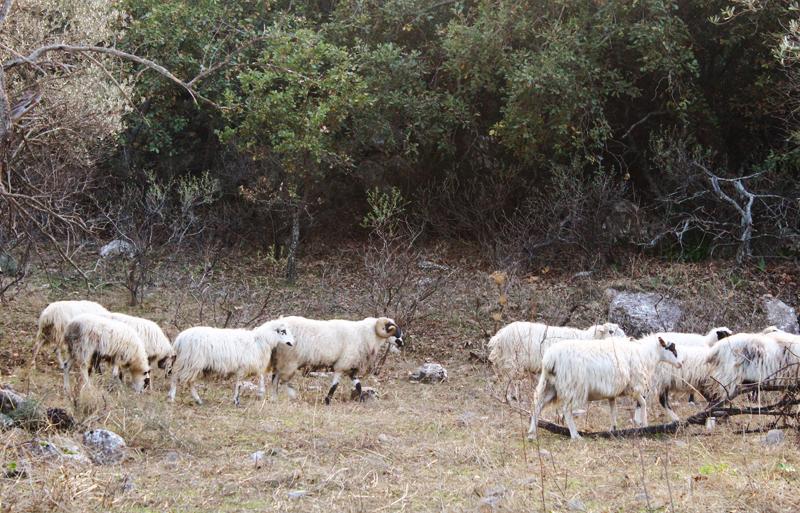 Εξόρμηση στο χωριό Αμάρι, στον Ψηλορείτη, Κρήτη
