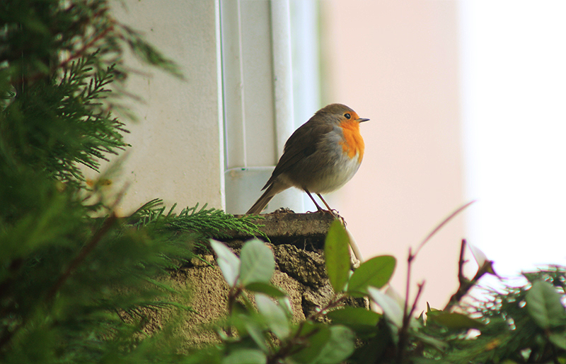 Robins Close ups (4).png