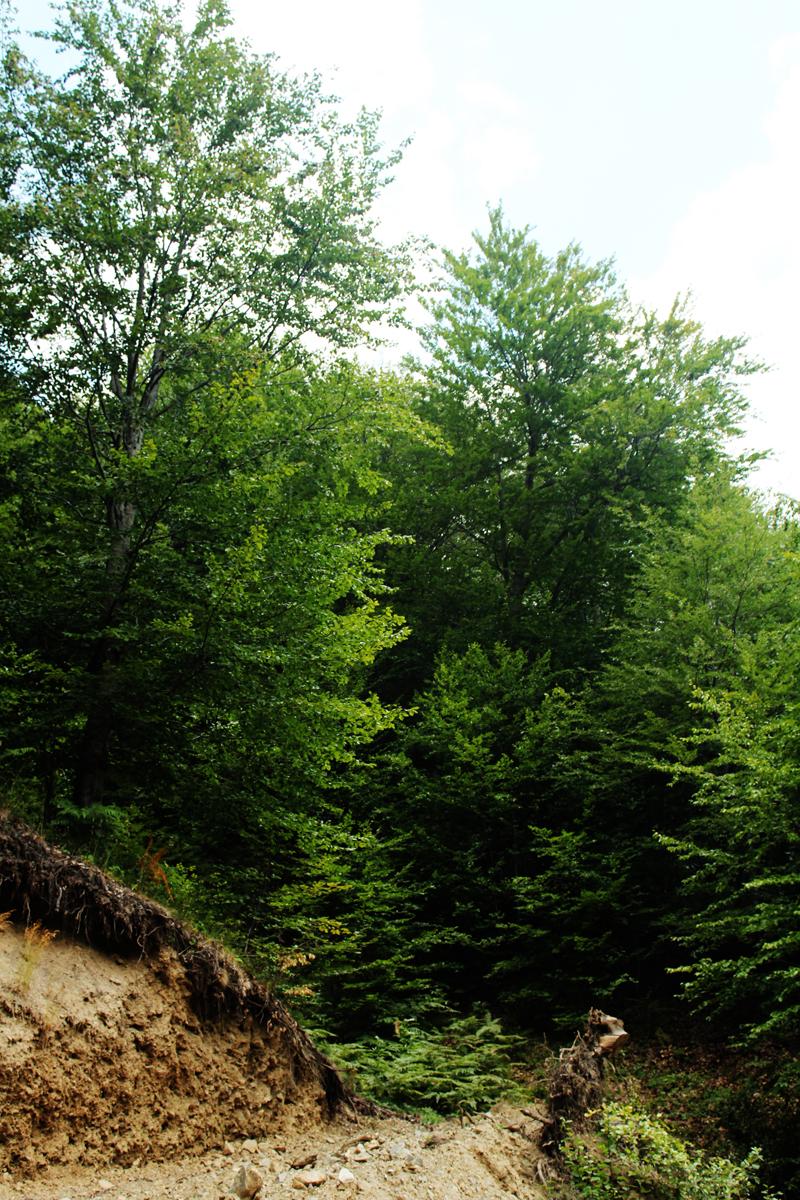 Καϊμακτσαλάν - όρος Βόρρας πεζοπορία από τους πρόποδες ως την κορυφή (1)