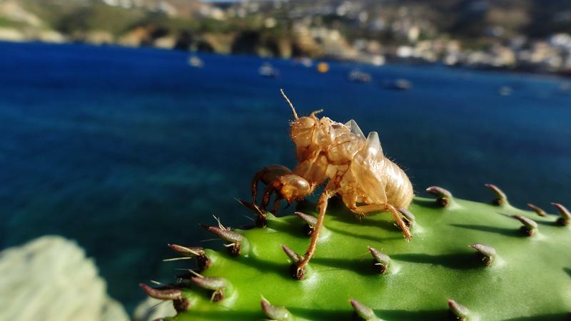 Agia Pelagia Beach Crete - Παραλία Αγίας Πελαγίας (5)