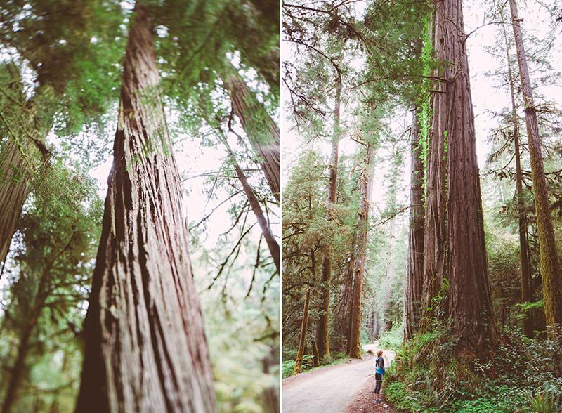 Το εθνικό πάρκο του Redwood στην Αμερική 2