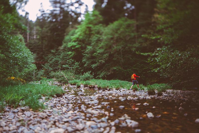 Το εθνικό πάρκο του Redwood στην Αμερική 3