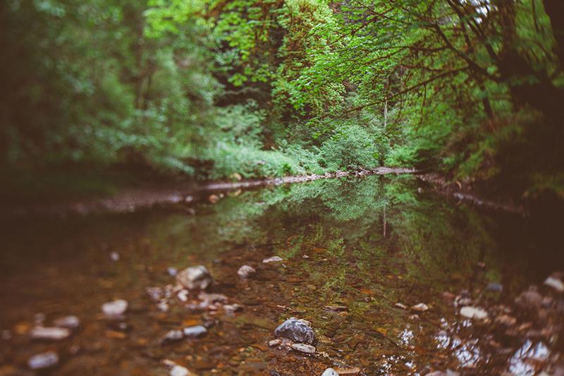 Το εθνικό πάρκο του Redwood στην Αμερική 4