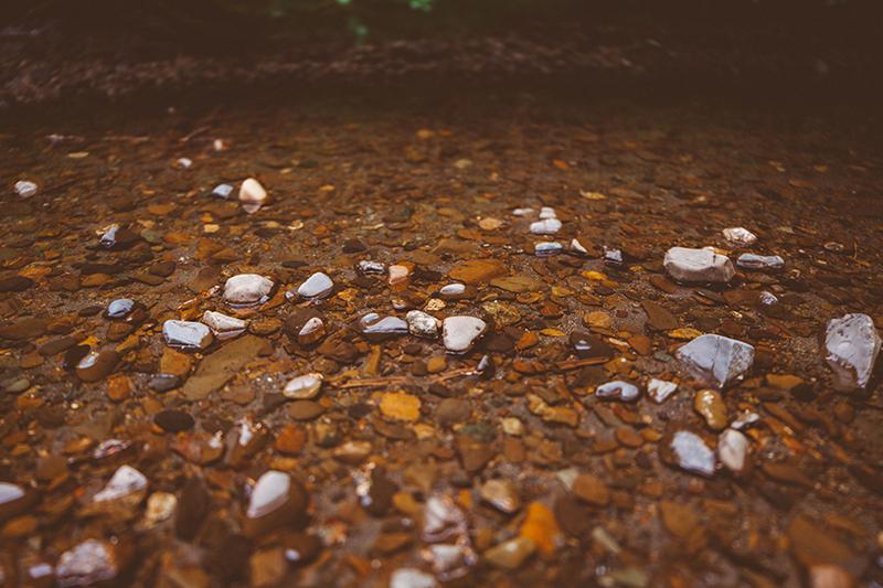 Το εθνικό πάρκο του Redwood στην Αμερική 5