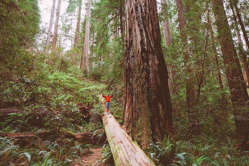 Το εθνικό πάρκο του Redwood στην Αμερική 6