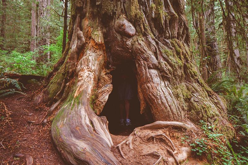 Το εθνικό πάρκο του Redwood στην Αμερική 7