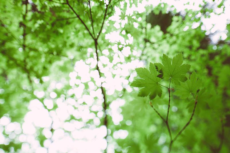 Το εθνικό πάρκο του Redwood στην Αμερική 8