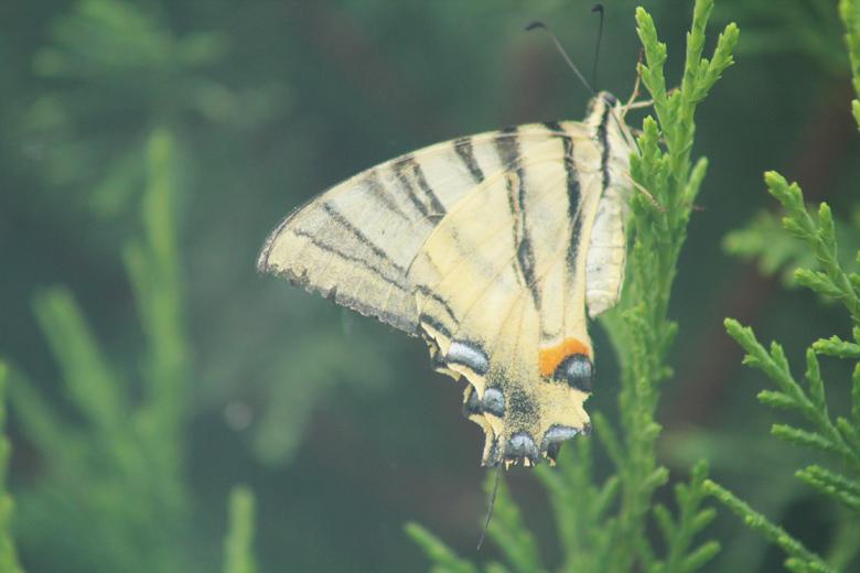 τεράστια πεταλούδα μετά την βροχή