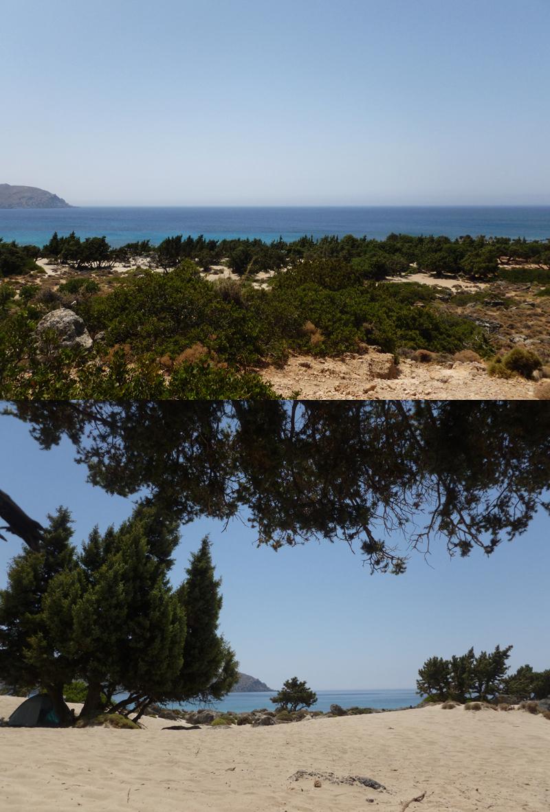 Κεδρόδασος, Κρήτη