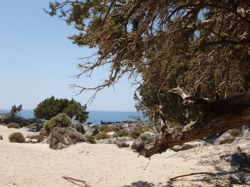 Κεδρόδασος, Κρήτη 3