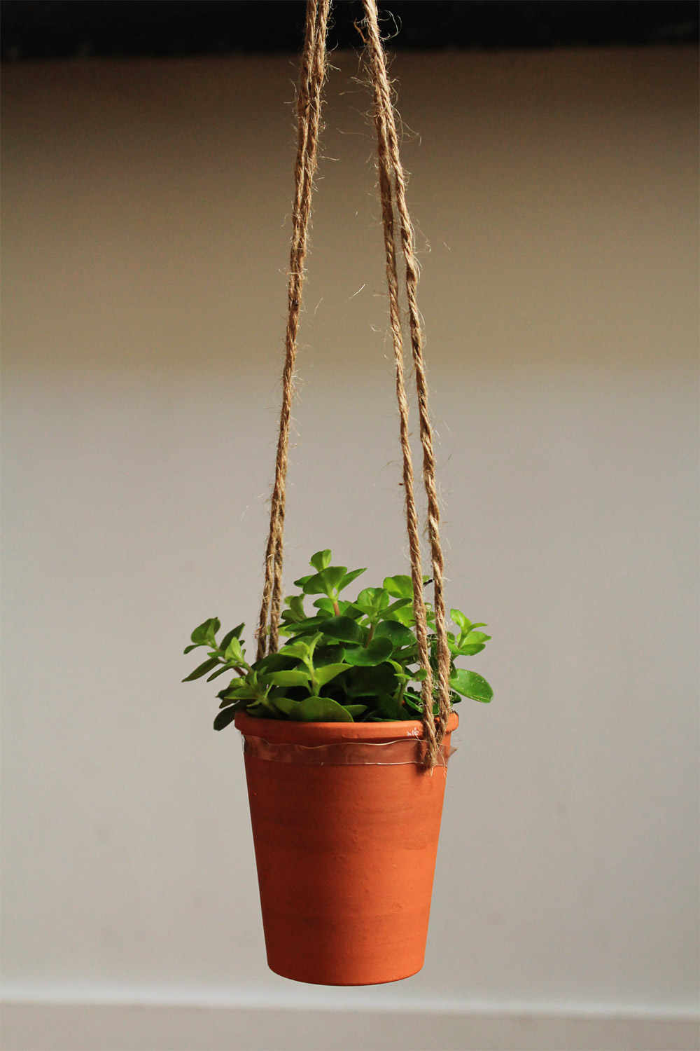 Floating hanging plant easy and quick | from In Whirl of Inspiration