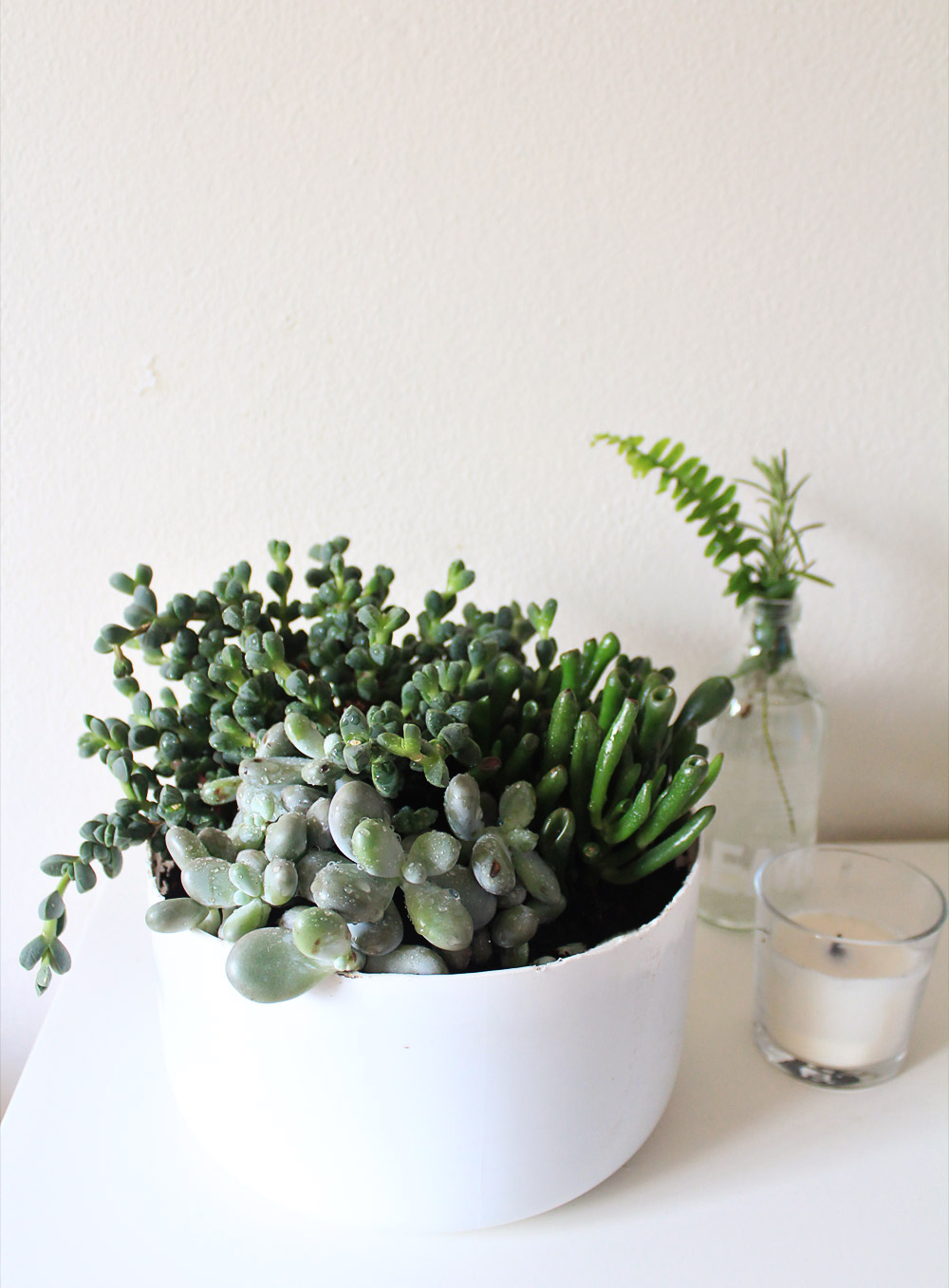Convert a small plastic tank into a pot for succulents from IN WHIRL OF INSPIRATION