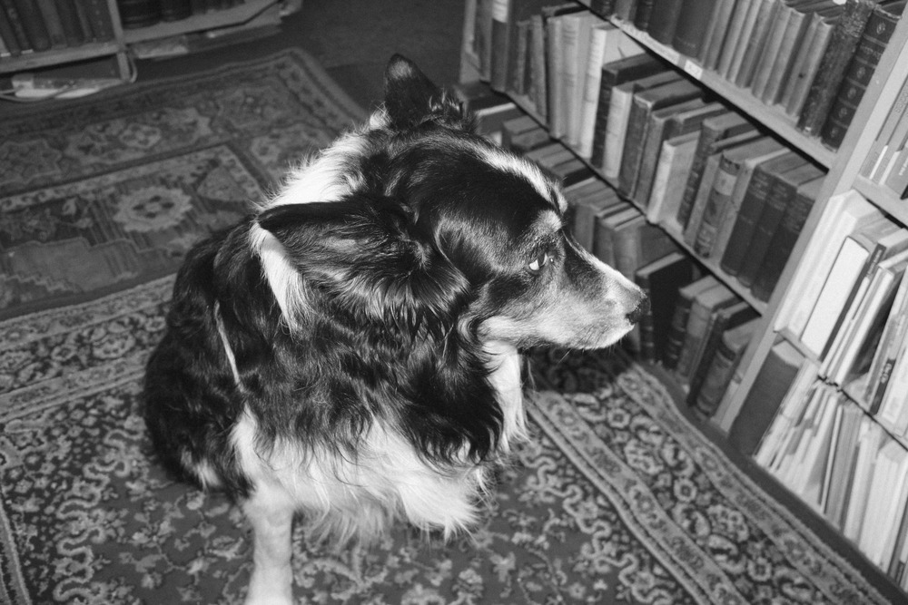 Book Shop Doggie.
