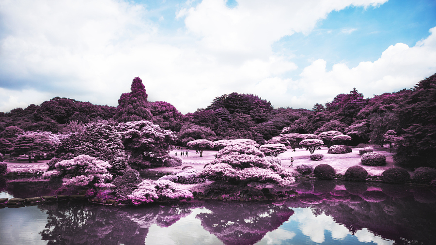 Meiji Shrine Gyoen - Infrared