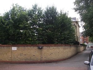Hornbeam+pleached+screen.JPG