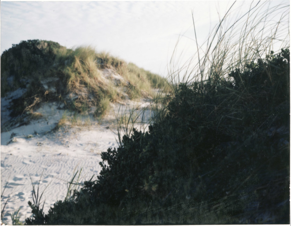 polaroids 1.jpg