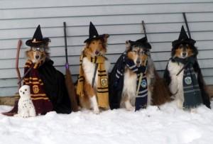 hogwarts-300x203.jpg