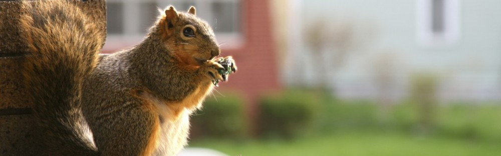 May-Squirrel-21-1024x319.jpg