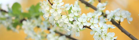 May_Flowers.jpg