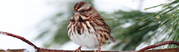 jan_sparrow.jpg