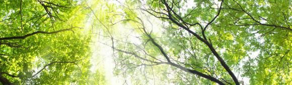 July_Trees.jpg