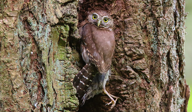 That Owl Means Business. But Visit Forest Park Anyway.
