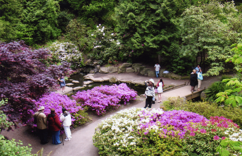 In PDX, We Sure Do Love the Rhodies!