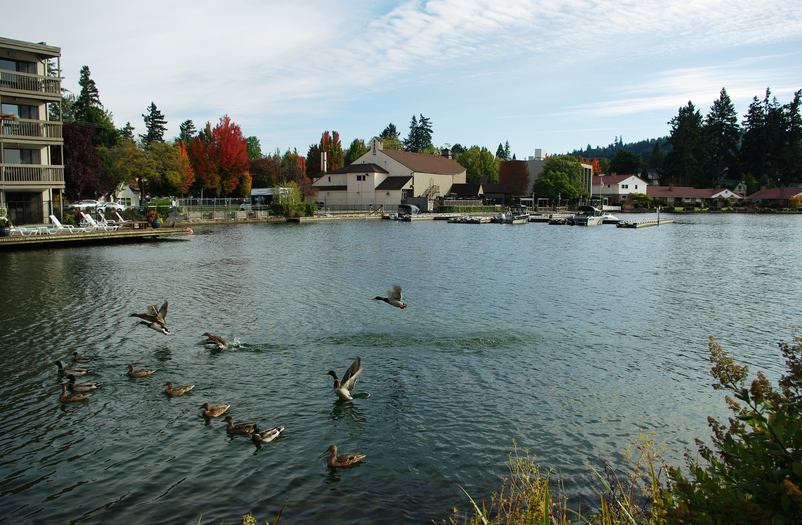 A View of What Put the Lake in Lake Oswego
