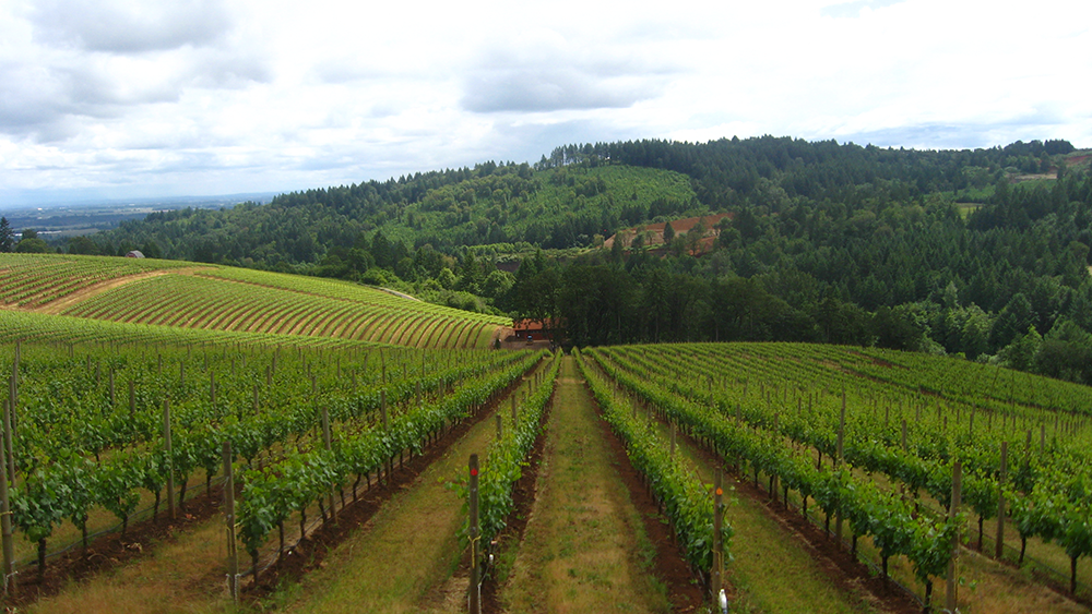 Wineries Along Highway99 in Oregon's Wine Country