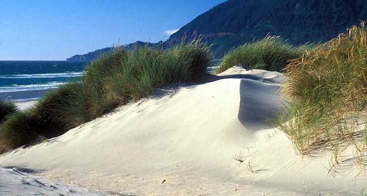 Get Sand in Your Picnic Basket... and Maybe Everywhere Else