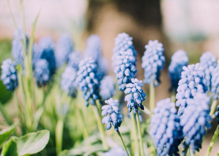 Diy Spring Garden Prep How To Make Raised Flower Beds Urban