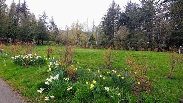Meadow facing SW.jpg