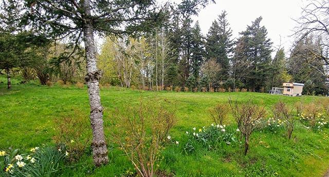 Meadow Facing NW.jpg